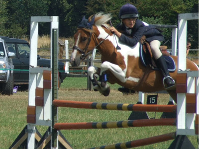 connemara pony for sale